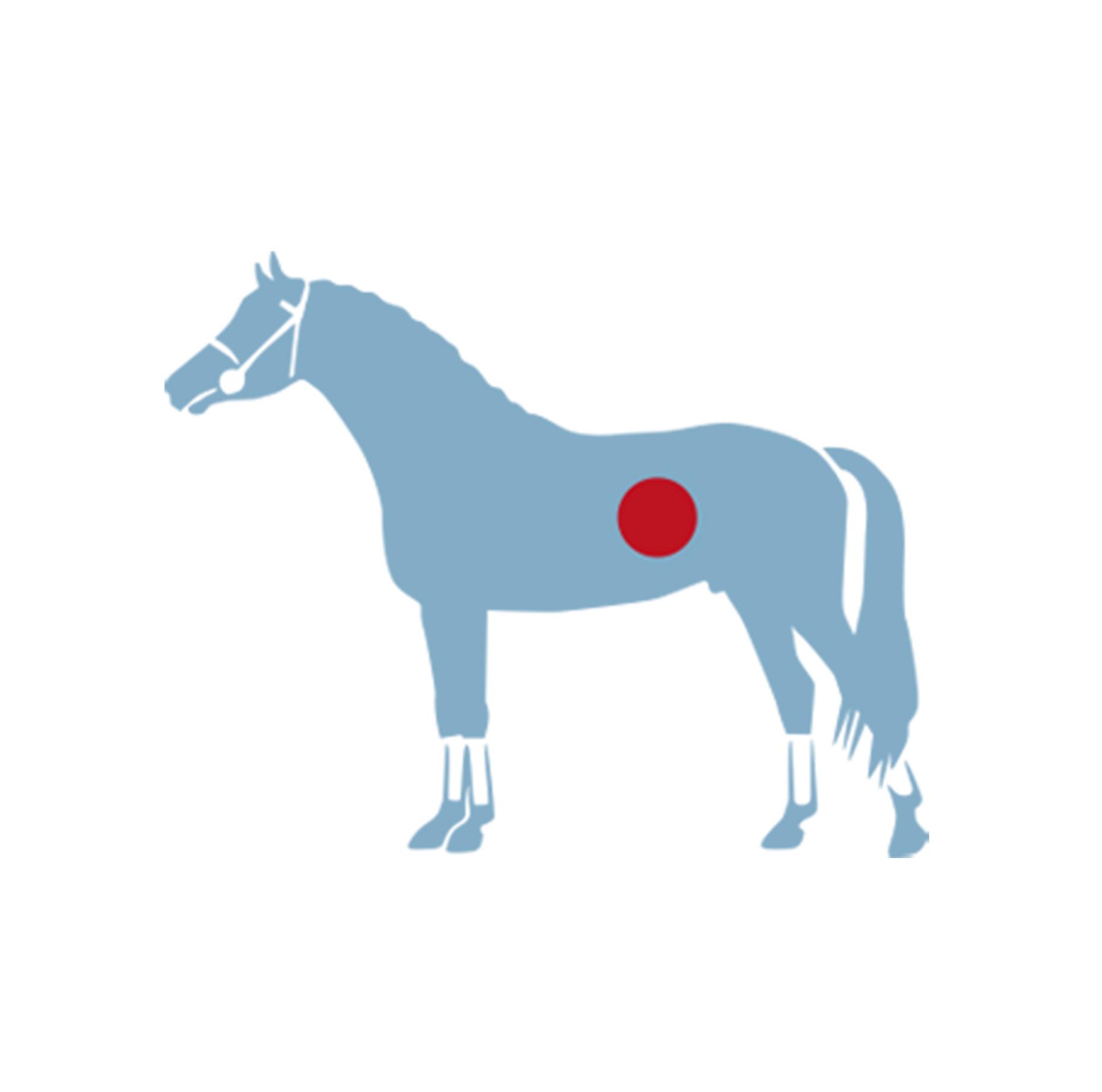 Hefe für das Pferd – Wann und wie sie mein Pferd unterstützt